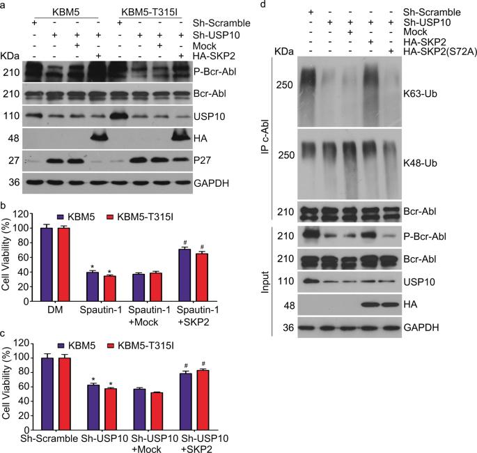 (PDF) USP10 modulates the SKP2/Bcr-Abl axis via
