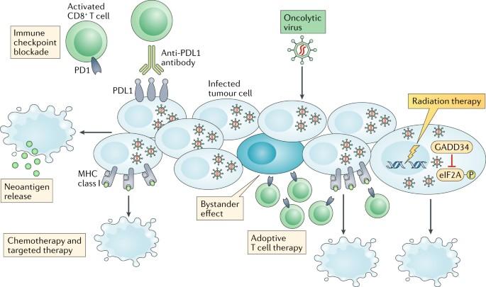AdAPT Oncolytic Virus Platform   EpicentRx