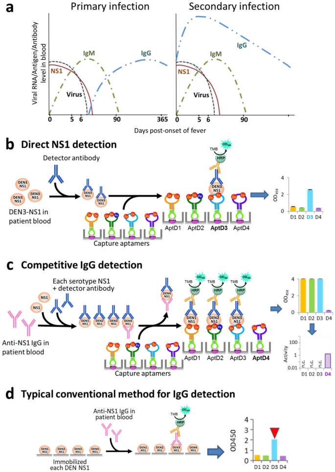A DNA aptamer with high affinity and specificity for