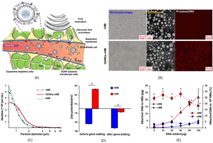 [Full text] Ultrasound-Mediated Co-Delivery of miR-34a and