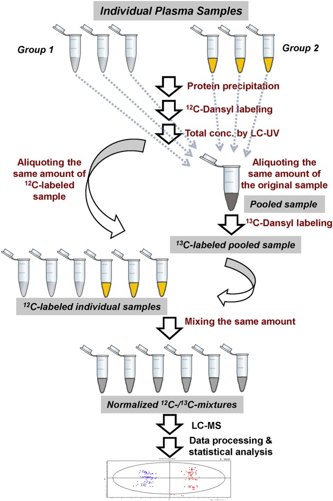 (PDF) Application of the SILAC (stable isotope labeling