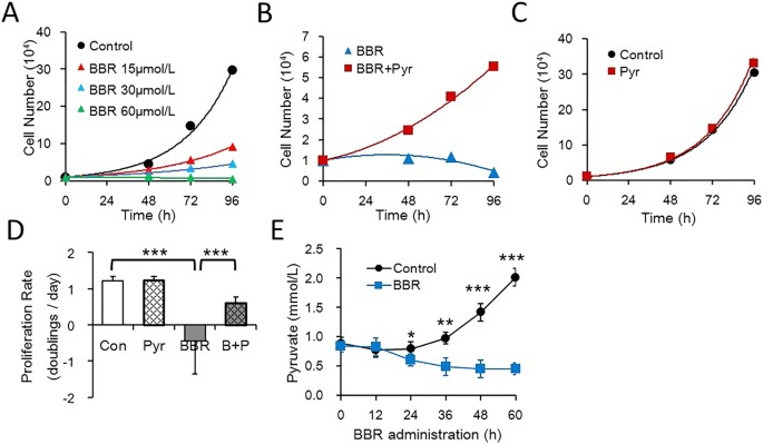 Ectopic expression of NRF3 suppresses breast cancer cell