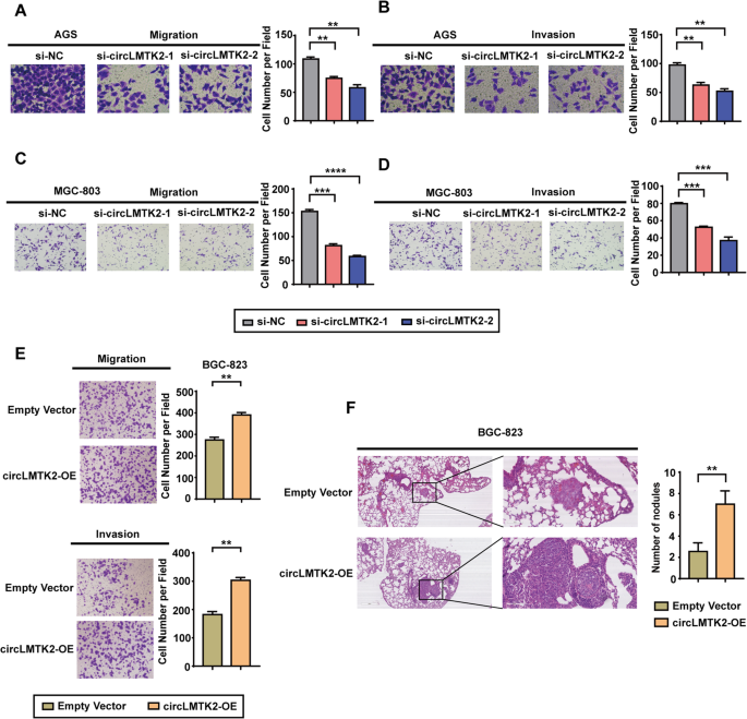 circLMTK2 acts as a sponge of miR-150-5p and promotes