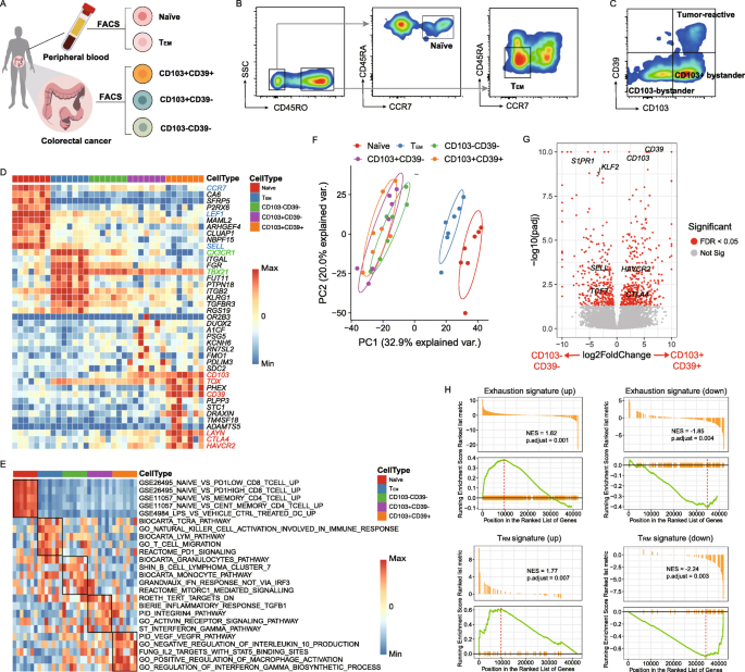 Single Cell Rna Sequencing Scrna Seq Of Cells: Distinct Epigenetic Features Of Tumor-reactive CD8+ T
