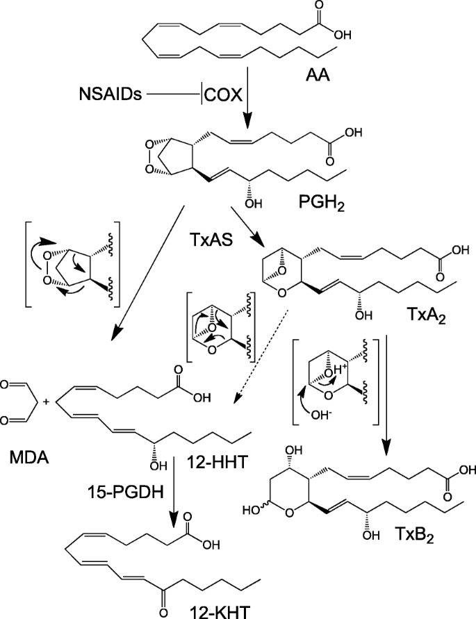 Biological functions of 12( S )-hydroxyheptadecatrienoic ...