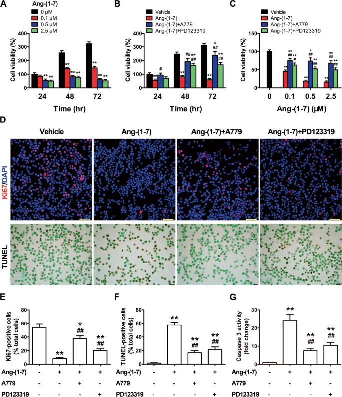 Angiotensin II type I receptor (AT1R) is an independent