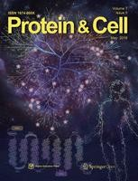 protein and cell