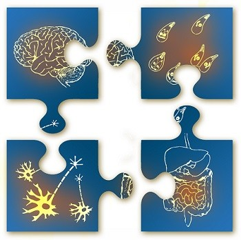 Microbiota-gut-brain jigsaw