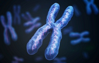 RED chromosome picture