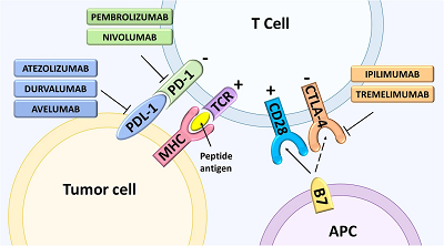 Clinical development of targeted and immune based anti-cancer therapies image