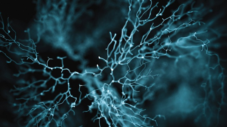 Neuron cell system shown in blue