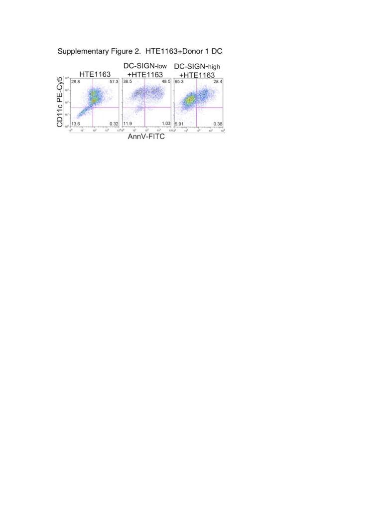 Dendritic Cells (DC) Facilitate Detachment of Squamous