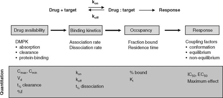 Applications of Binding Kinetics to Drug Discovery