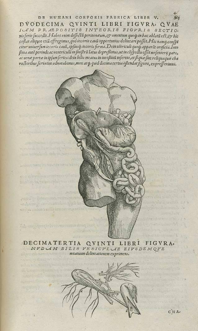 Geschichte der anatomischen und klinischen Obduktion | SpringerLink