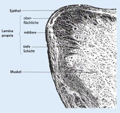 Stimmbildung in Bezug auf die Strukturen des Kehlkopfs | SpringerLink