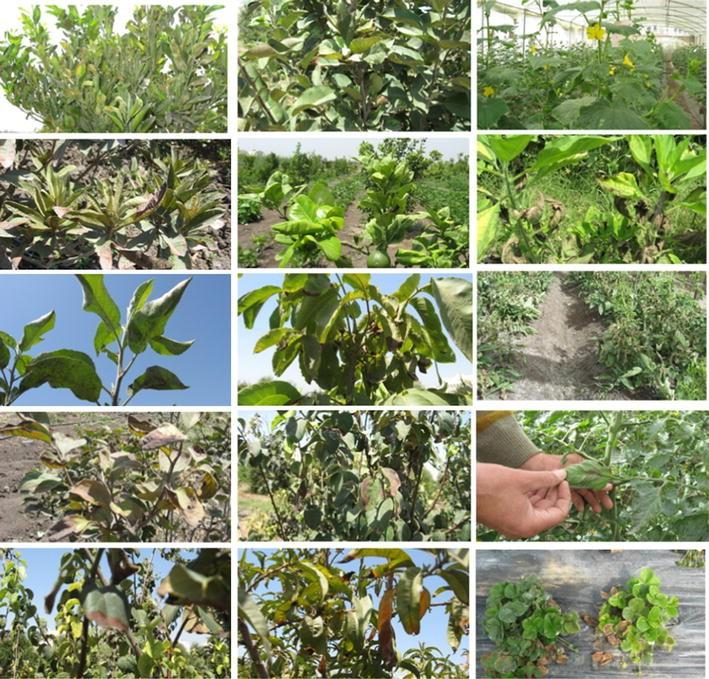 Selenium and nano-selenium in plant nutrition | SpringerLink