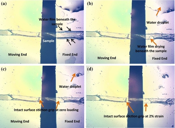 The mechanical properties of plant cell walls soft material at the open image in new window malvernweather Image collections