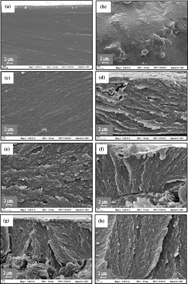 Enhanced electrostatic dissipative properties of chitosan