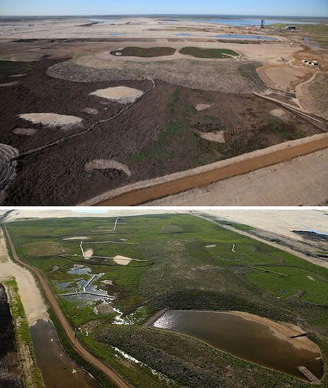 Forest restoration following surface mining disturbance: challenges