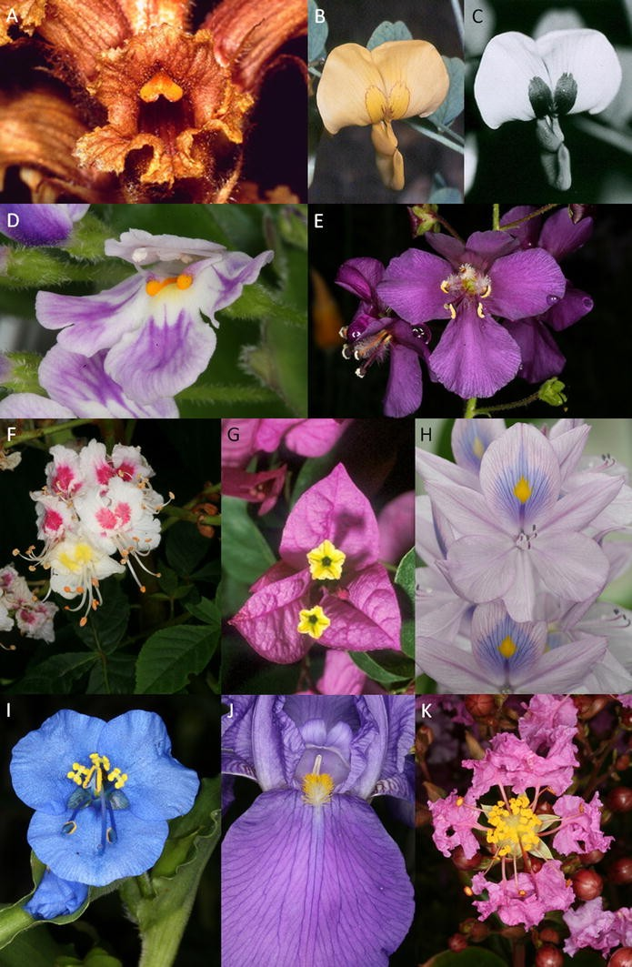Pollen and stamen mimicry: the alpine flora as a case study
