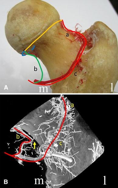 Fig.7A–B