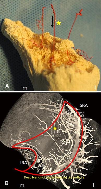 Fig.8A–B