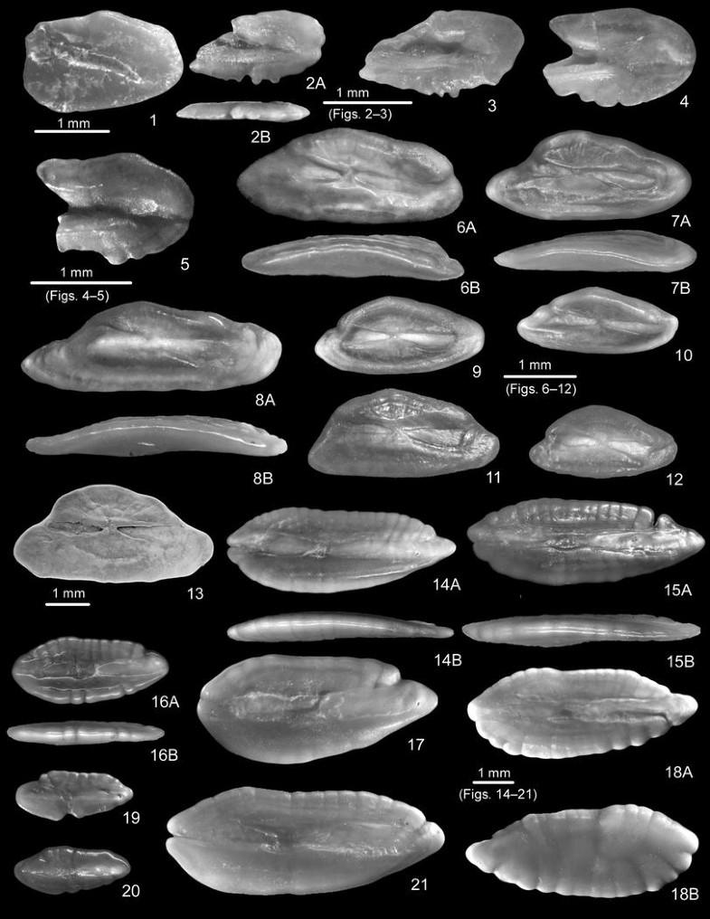 Fish otoliths from the Konkian (Miocene, early Serravallian) of ...