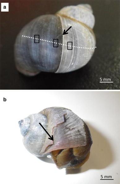 Fig.2a–b