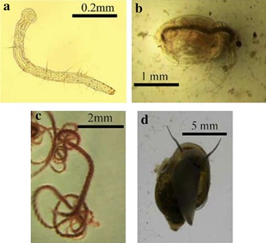 A Review of the Use of Earthworms and Aquatic Worms for Reducing