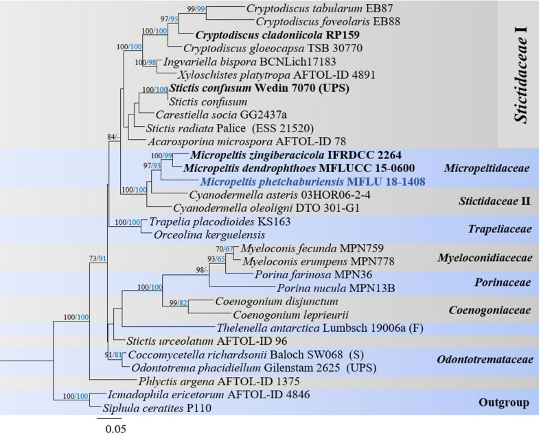Fungal diversity notes 929–1035: taxonomic and phylogenetic