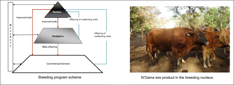 Determinants of breeders' participation to an indigenous
