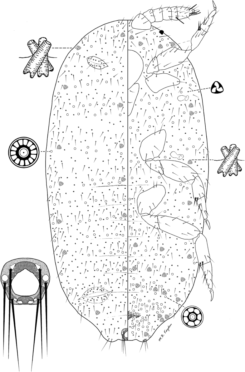 Fig 3