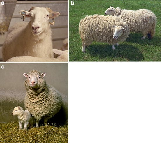 Animal breeding in the age of biotechnology: the