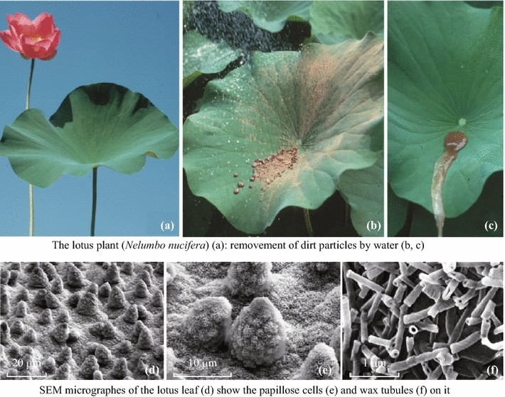 Plant Surfaces Structures And Functions For Biomimetic Innovations