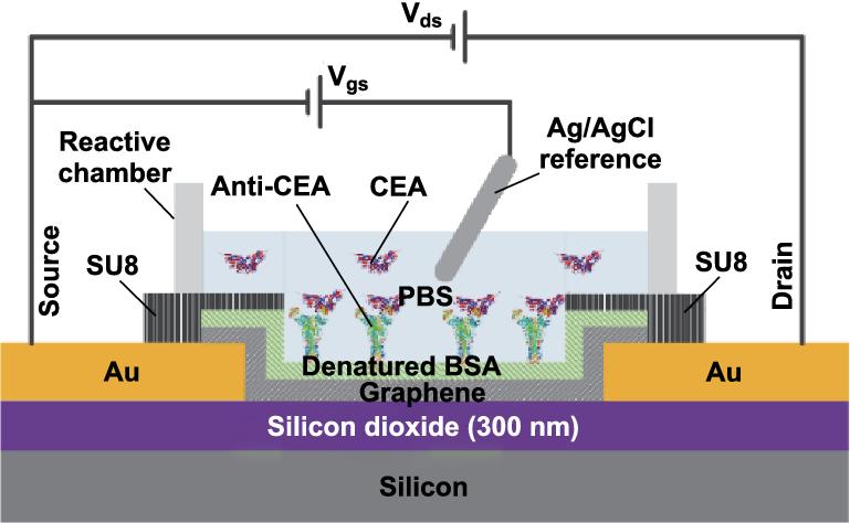 Novel Graphene Biosensor Based on the Functionalization of