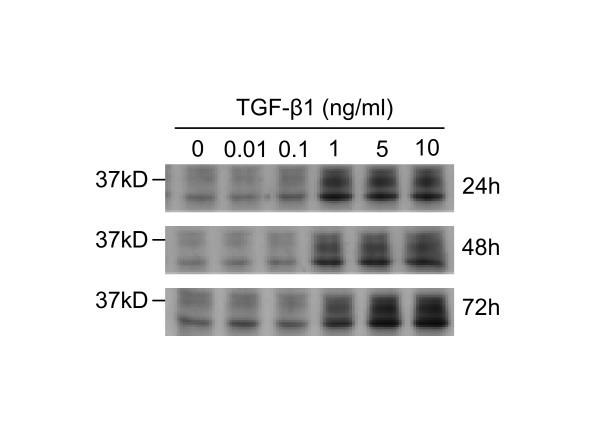 Figure 6294