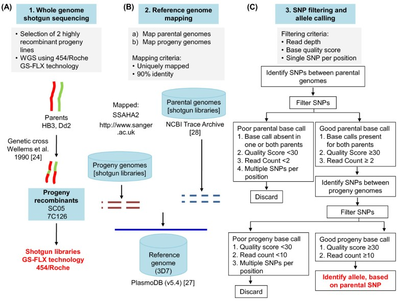 High-throughput 454 resequencing for allele discovery and