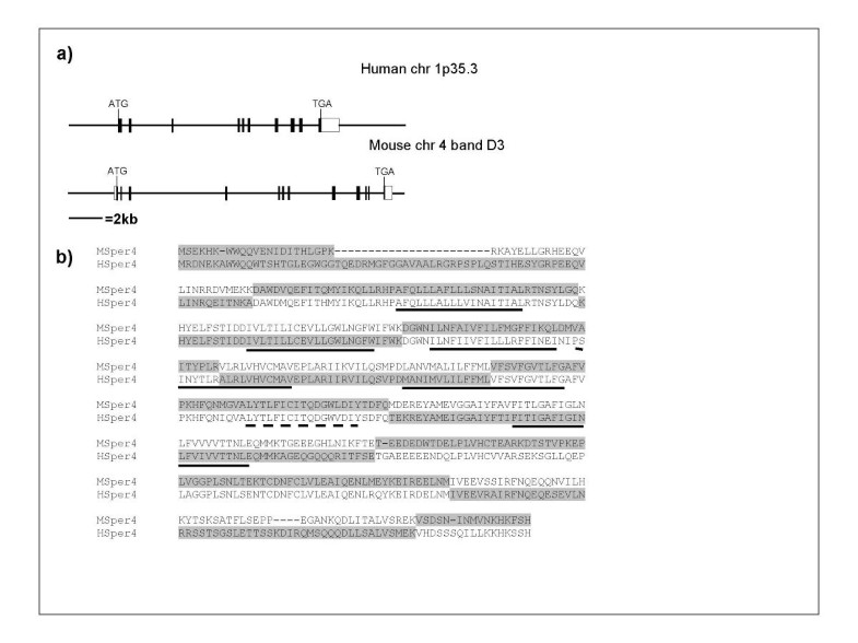 Identification of human and mouse CatSper3 and CatSper4