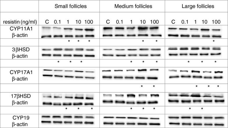 cyp11a1 steroidogenesis