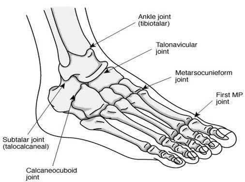 Review For The Generalist Evaluation Of Pediatric Foot And Ankle