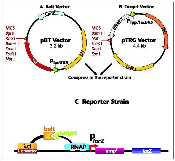 The Proteomic Code A Molecular Recognition Code For Proteins