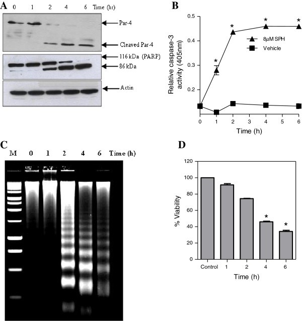 Caspase 3 Mediated Release Of Sac Domain Containing