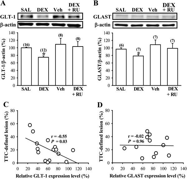 neonatal dexamethasone treatment exacerbates hypoxic