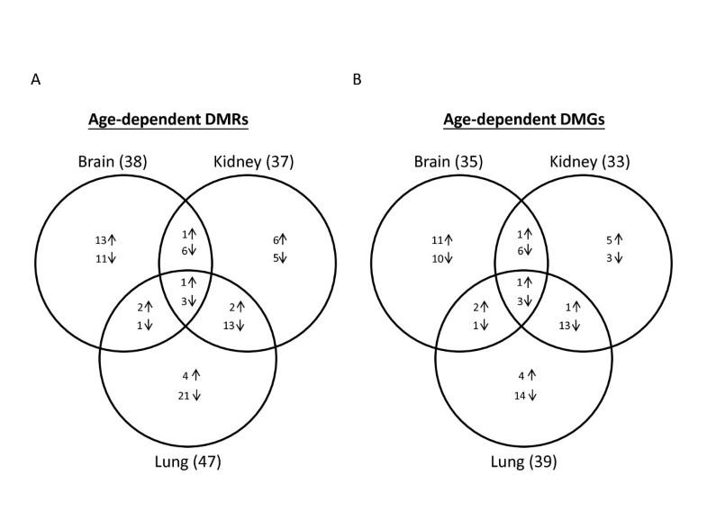 extensive epigenetic reprogramming in human somatic