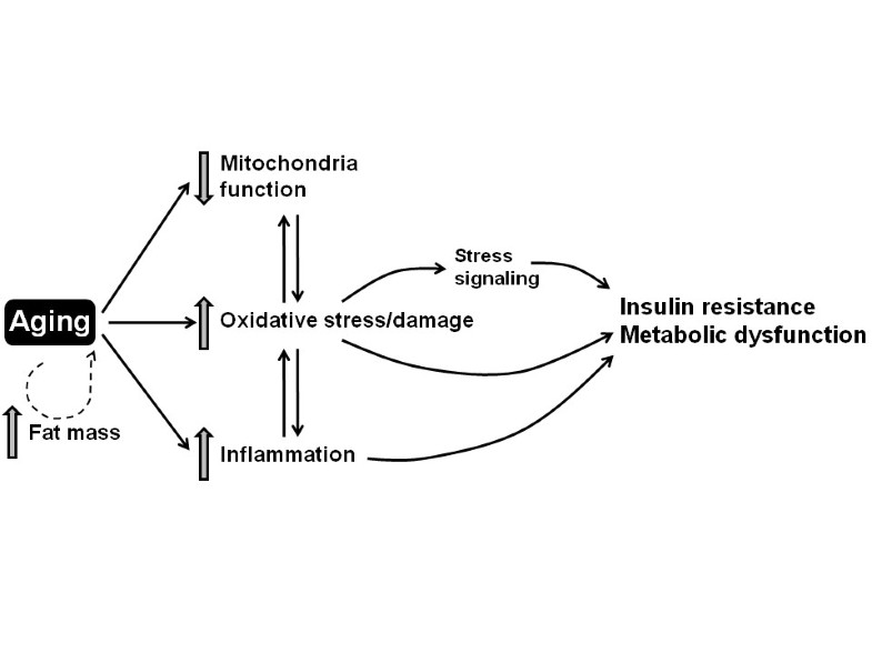 Oxidative stress in the etiology of age-associated decline in
