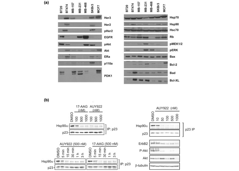 (PDF) NVP-AUY922: A small molecule HSP90 inhibitor with