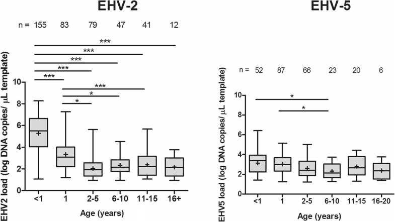 Prevalence And Sequence Analysis Of Equid Herpesviruses