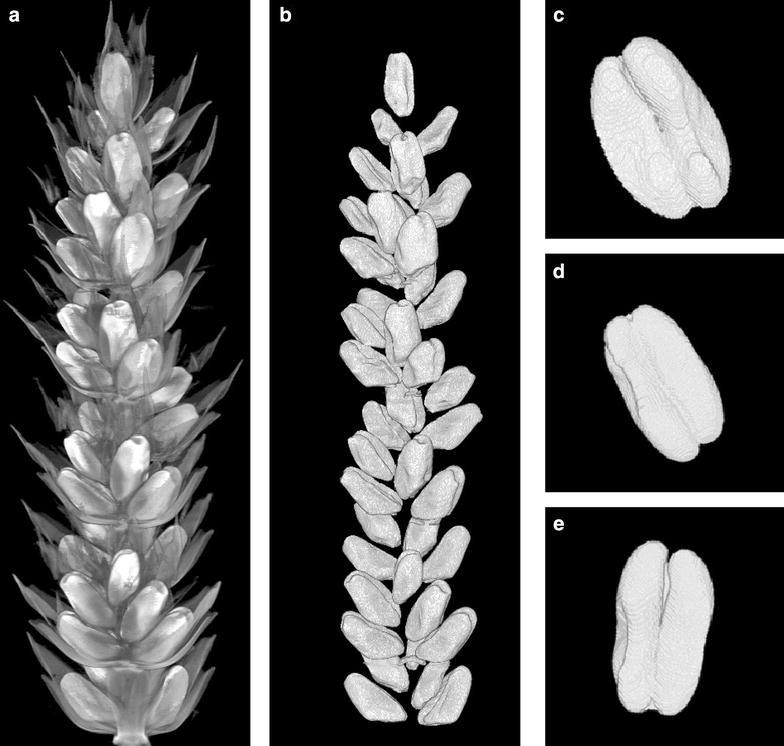 Non-destructive, high-content analysis of wheat grain traits