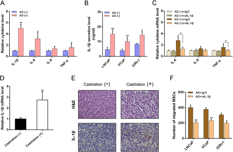 Mesenchymal Stem Cells Recruited By Castration Induced