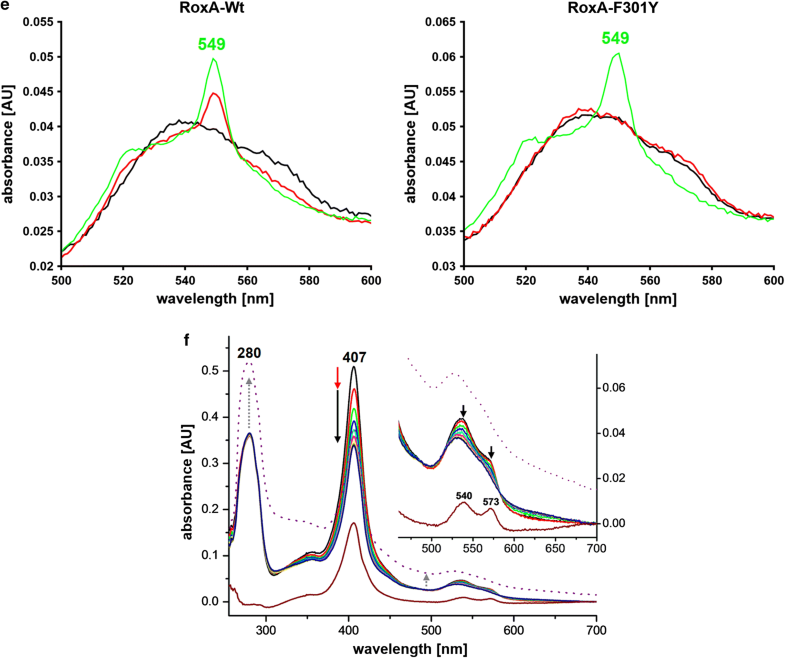 Towards The Understanding Of The Enzymatic Cleavage Of